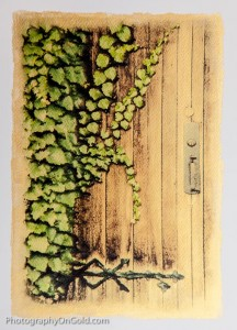 Vines on the Door